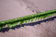 Green Guide Rope (Neillwphoto) Tags: seaweed green net beach bay fishing lunan rope guide