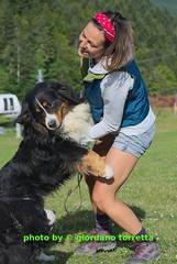 gio_k2_08_2014_545 (giordano torretta alias giokappadue) Tags: cane animale abetone