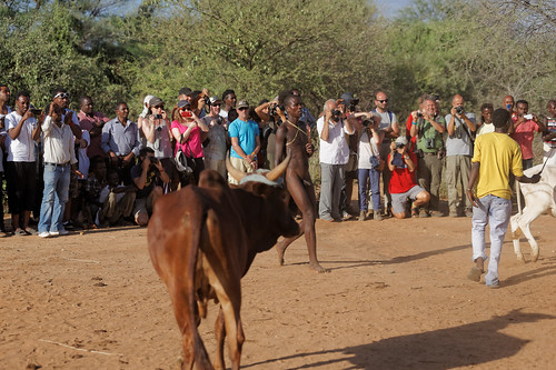 Bull jumping ceremony at Turmi, Omo valley, Ethopia (Hamer tribe)
