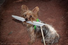 Rosco's Feather (lezlievachon) Tags: