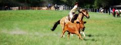Laando boi (Eduardo Amorim) Tags: brazil horses horse southamerica brasil caballo cheval caballos lazo kuh cow rind cattle cows ox ganado cavalos oxen mucca pferde cavalli cavallo cavalo gauchos pferd riograndedosul pampa bois khe vache vaca vacas campanha brsil vaches boi chevaux gaucho buey  lasso amricadosul mucche beijos lao fronteira boeuf vieh gacho amriquedusud  gachos  boeufs buoi sudamrica rinder gado suramrica amricadelsur bueyes sdamerika mue  bestiami btail americadelsud capodoleo americameridionale campeiros santoamor campeiro passodomoinho