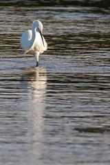 DSC_0215.jpg (origine1) Tags: reflection bird animal mirror fishing wildlife bretagne reflet miroir saline oiseau saltpan pche littleegret egrettagarzetta lecroisic maraissalant guerande saltern aigrettegarzette saltevaporationpond saliculture activitsalicole
