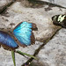 "Butterfly Conservatory • <a style=""font-size:0.8em;"" href=""http://www.flickr.com/photos/25269451@N07/15392804761/"" target=""_blank"">View on Flickr</a>"