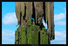 Old wood (Ilan Shacham) Tags: wood old uk blue england sky green london thames pier moss dock fineart stack fineartphotography london2015