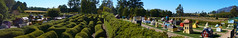 Hedge Maze (RobMacPhotography) Tags: landscapes hedge maze tazmazia promised land promisedland tasmania australia lower crackpot village staverton road mt roland sony a6000 rob mac photography sunny blue skies