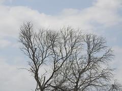 Ingá, PB. (Pedro Valadares) Tags: ingá paraíba brasil brazil semiárido árvore tree