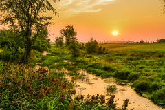 Swamp rising (NUNZG) Tags: sunrise sun nature landscape outdoor stream trees
