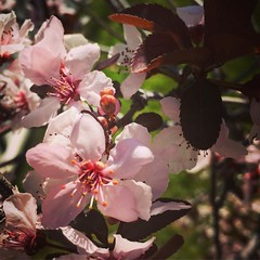 Spring blossoms in the neighborhood A neighbor's tree caught my eye as I walked to vote yesterday. #flowers #blossoms #trees #nature #outdoors #spring #LA #losangeles #california #ig_losangeles #losangeles_gram #wheream_I_LA #insta_losangeles #cali_gramme (dewelch) Tags: ifttt instagram spring blossoms neighborhood a neighbors tree caught eye i walked vote yesterday flowers trees nature outdoors la losangeles california iglosangeles losangelesgram whereamila instalosangeles caligrammers lagrammers losangelesgrammers discoverla conquerla unlimitedlosangeles californiacaptures uglagrammers iggarden flowersofinstagram flowerstagram treestagram rainbowpetals plantstagram