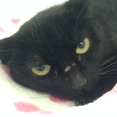 Maria - 1 year old spayed female