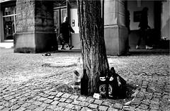 000156 (la_imagen) Tags: sokak sw bw blackandwhite siyahbeyaz  monochrome strasenfotografieistkeinverbrechen street streetandsituation streetlife streetphotography menschen people insan waste müll çöp lindau lindauimbodensee bodensee laimagen lakeconstanze lagodiconstanza lagodeconstanza