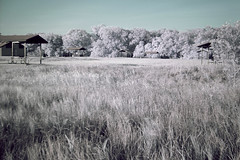 DSC05497_IR (Walker the Texas Ranger) Tags: park lake ir photography ray texas state fork infrared roberts elm