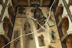 Paäontologisches Museum (epemsl) Tags: museum münchen flugsaurier paäontologisches
