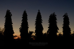 Sunset Silhouette (Monycka Morales) Tags: blue trees sunset shadow summer orange black tree nature beautiful silhouette dark photography dawn nikon asia pretty philippines nostalgia breeze ph nikonian