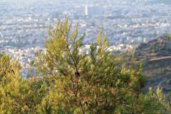 CV1P7918 (Nasos Efstathiadis Photography) Tags: athens βουνό ymittos αθήνα πανοραμική υμητόσ