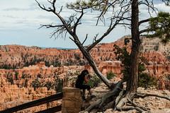 Bryce Canyon, Utah - photographer at Sunset Point (MikePScott) Tags: camera trees usa lens utah rocks unitedstates amphitheatre canyon cliffs hoodoo bryce sunsetpoint topography fairychimney brycecanyonnationalpark tentrock earthpyramid nikond800 nikon28300mmf3556