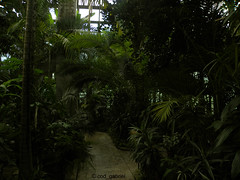 In the greenhouse of Bucharest Botanical Garden (cod_gabriel) Tags: rainforest greenhouse romania jardimbotnico botanicalgarden bucharest hortusbotanicus bucuresti rumania romenia sera romnia bukarest roumanie jardnbotnico  ortobotanico boekarest bucarest romnia botanischergarten  romanya rumnien roemeni rumnien  rumana romnia gradinabotanica bucureti  bucharestbotanicalgarden rumunia ogrdbotaniczny  romnia botanisktrdgrd botanikbahesi  bucareste     rumunjska      grdinbotanic  dbrndz grdinabotanicdbrndz ser pdureecuatorial kebunbotani