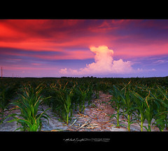 Leading Lines. (StormLoverSwin93 | Into the Storm) Tags: blue light sky color nature lines clouds canon illinois row line thunderstorm redsky stormclouds thunderhead cumuluscongestus 60d canon60d pulsestorm