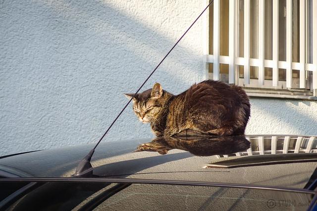Today's Cat@2014-07-29