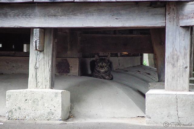 Today's Cat@2014-08-04