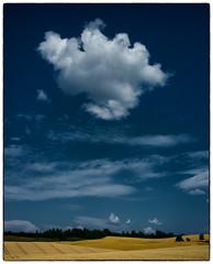 24. juli 2014 (Krogen) Tags: norway landscape norge norwegen akershus romerike krogen landskap ullensaker fujifilmx100