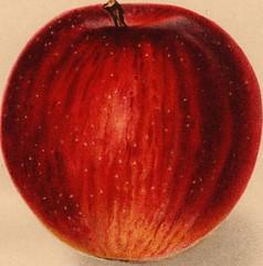 Anglų lietuvių žodynas. Žodis purplish red reiškia rausvai raudona lietuviškai.