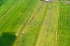 SMS_20140626_1046.jpg (Luchtfotografie SiebeSwart.nl Aerial Photography) Tags: blackandwhite holland netherlands grass milk weide nederland meadow aerialview aerial pasture aerialphoto pastures gras vee wei birdseyeview melk luchtfoto weiland landschap veenweidegebied vogelperspectief vogelvluchtperspectief melken melkvee zwartbont dairyfarming cultuurlandschap catttle milchcow dairycattle veeteelt luchtopname melkkoe friesiancows melkveehouderij culturelandscape melkkoeien veenweide agroveeteelt stockcattlebreeding blackpatched michcows bogmeadowsarea