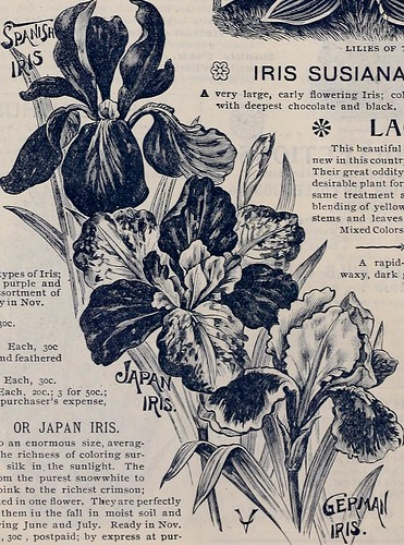 """Image from page 13 of """"Vaughan's gardening illustrated : autumn edition"""" (1893)"""