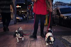Doggies (Spyros Papaspyropoulos) Tags: street light red woman dog blur color colour dogs face look night photoshop dark walking photography shadows darkness nightshot candid streetphotography athens flashphotography greece motionblur stare 20mm candidphotography streetphotographer colourphotography attiki colorfx viveza2 sonynex nex6 sonynex6 sel20f28 rearflashphotography streethunters