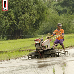 Halang/Linang 03 (Soil Cultivation) (ilusyonimages) Tags: street tractor asian photography asia farm philippines farming images illusion filipino farmer ricefields handtractor ilusyon