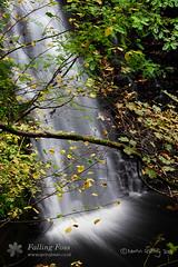 May Beck, Falling Foss (Martin Godfrey) Tags: waterfall yorkshire north falling moors foss