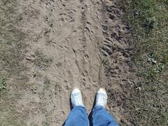 Chucks (Oli-unterwegs) Tags: blue boy man stars shoe sand all dirty jeans dirt converse taylor sneaker chuck mann blau schuhe footprint imprint schuh dreck turnschuhe footmark schmutzig abdruck schmutzige schuhabdruck fusspur fusandruck