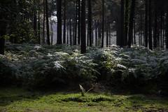 (JONBRNS Photography) Tags: life new uk light fern nature forest woodland photography grow it we got wax in jonbrns