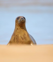Seal (Mike Mckenzie8) Tags: wildlife seal british mamal