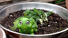 Strawberry Pest (Dennisbon) Tags: plant green eos turtle strawberries australia melbourne plastic ornament dennisbon strawberrypest