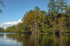 Byrne's Lake, Alabama (Shane Adams Photography) Tags: trees nature alabama swamp wetlands cypress baldwincounty ilobsterit byrneslake