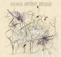 Gestolztes Herz (heiko ELIAS friedrich) Tags: collage natur pflanzen elias grafik heiko friedrich zeichnung realismus wachsen organisch gegenstndlich