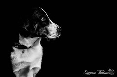 """""""What's going on over there?!"""" (meepeachii) Tags: strase pet haustier tiere tier hund sw bw dog animal lowkey streetphotography"""