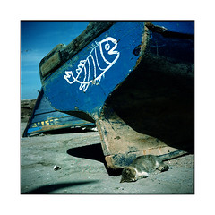 the dream • essaouira, morocco • 2014 (lem's) Tags: rolleiflex port cat boat chat dream morocco maroc bateau essaouira reve planar