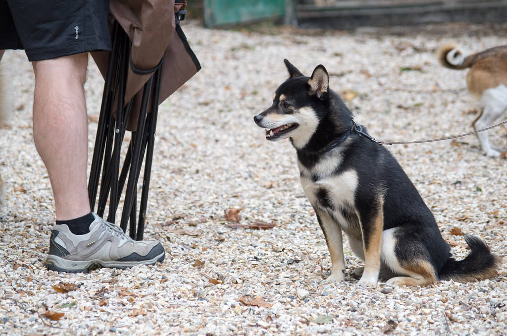 club canin frepillon