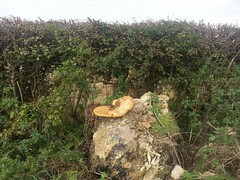20140928_103408_Normanby Rd