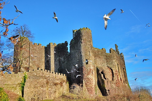Gulls In Ridge Lift Flash Mobbing Laugharne Castle