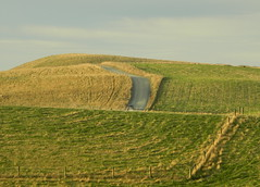 The long and winding road (Snorkle-suz) Tags: sky hills eveninglight landscape clouds newzealand nz aotearoa katikipointwildlifemanagementreserve otago outside outdoor nikoncoolpixl120 landforms