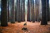 MM (Kash Khastoui) Tags: usa pine forest canon landscape walk south hill australia sugar nsw outback iranian laurel 6d kash 24105 khashayar batlow f40l khastoui