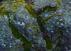 IF (freef0cus) Tags: moss boulder granite if mossy