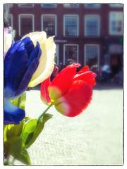 Plastic tulips (glukorizon) Tags: blue light red sunlight white plant flower backlight licht blauw nederland delft plastic frame tulip gossamer vignetting rood wit centrum grotemarkt tegenlicht zonlicht bloem odc zuidholland tulp kader kunststof odc1 vignettering ourdailychallenge