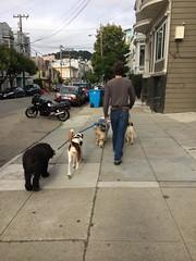 Still Walking Four Dogs on Waller Street (Lynn Friedman) Tags: dogs walking walk walker waller street sidewalk exercise lowerhaight sanfrancisco lynnfriedman 94117 walksf woonerven event spur 94105 advocacy nonprofit pedestriansafety missionst 94103