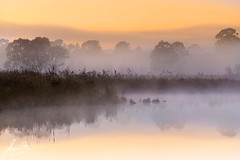 Pitt Town Foggy Sunrise (sachman75) Tags: mist water fog sunrise northwest australia lagoon nsw newsouthwales windsor hawkesbury pitttown canon135mmf2 sonya7r