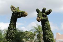 "Busch Garden • <a style=""font-size:0.8em;"" href=""http://www.flickr.com/photos/126051791@N07/14502402260/"" target=""_blank"">View on Flickr</a>"