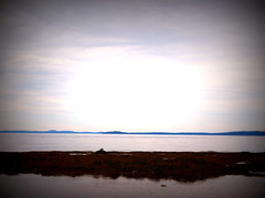 7.21.14: Seagull on Rock (Ruff Edge Design) Tags: ocean seaweed bay horizon maine lomoish searsport