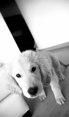 DSC_0936 (Manuel D Snchez) Tags: dogs perros dogos seleccionar